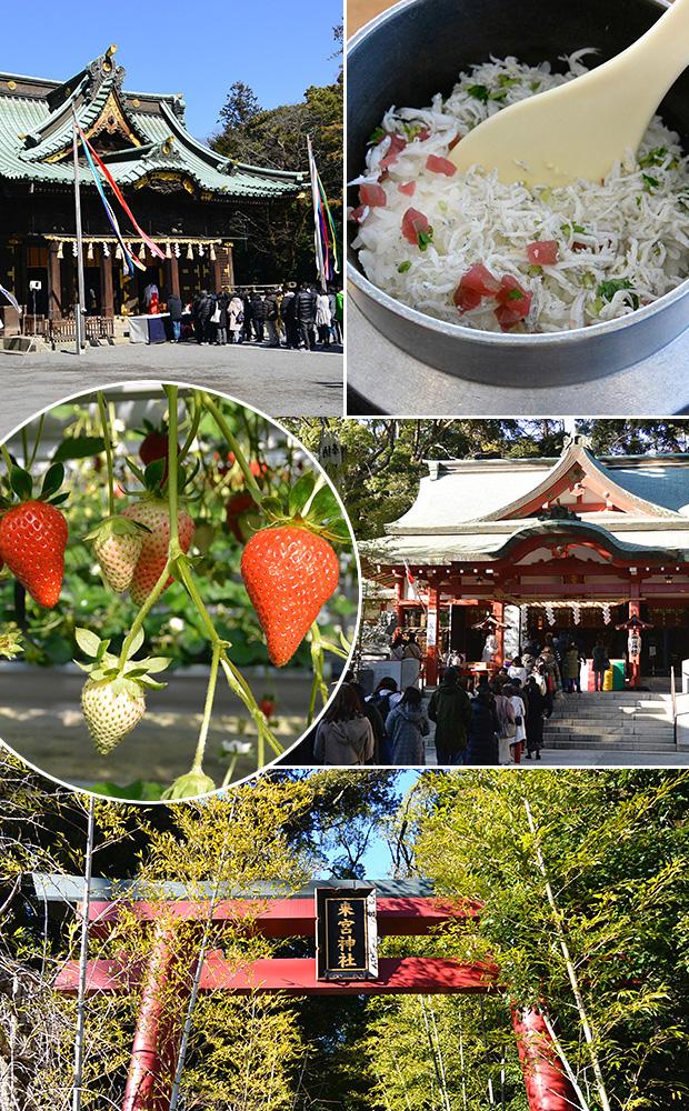 イチゴ狩り・三嶋大社と來宮神社
