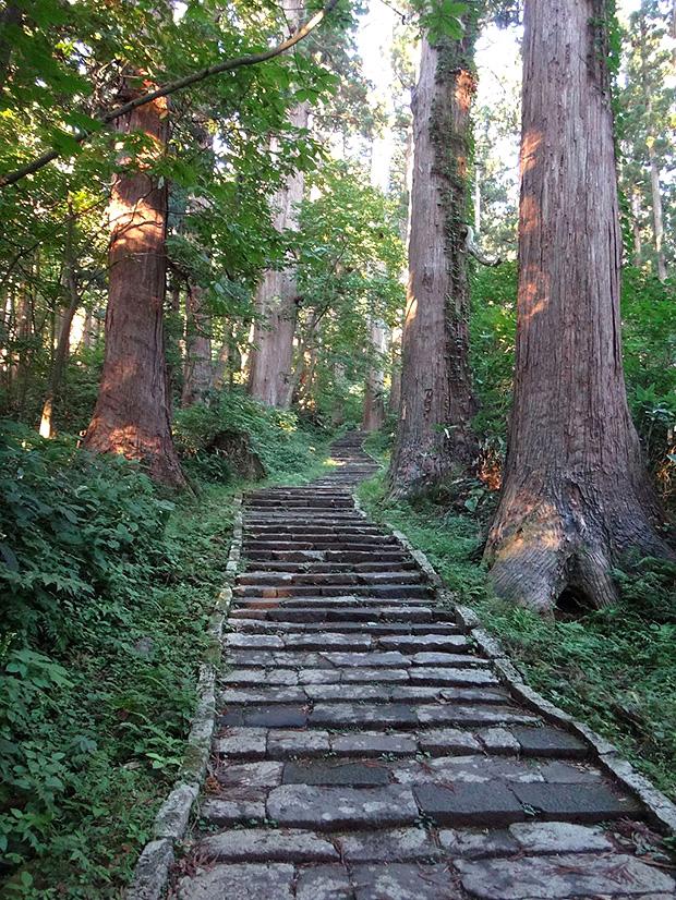 羽黒山・参道杉並木