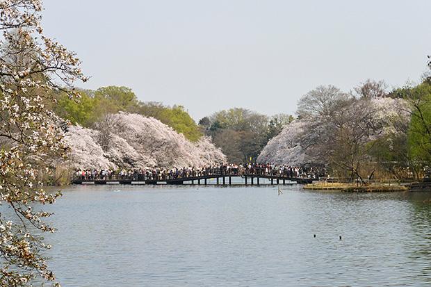 井の頭公園・七井橋
