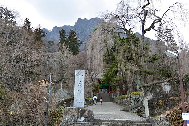 樹齢200年のシダレ桜