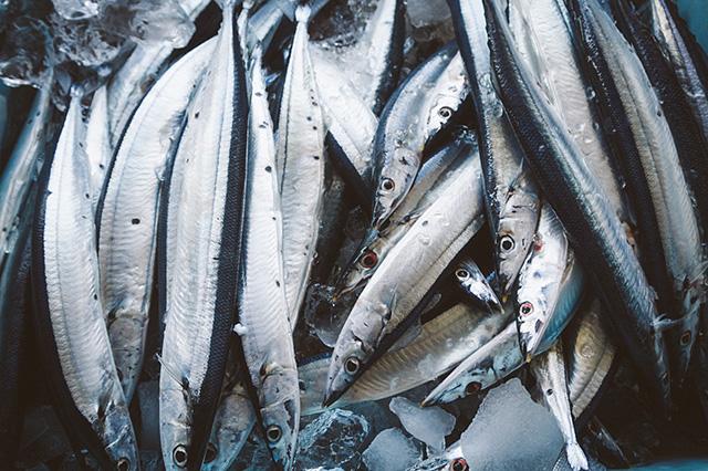 秋刀魚の旬は8月ですが、