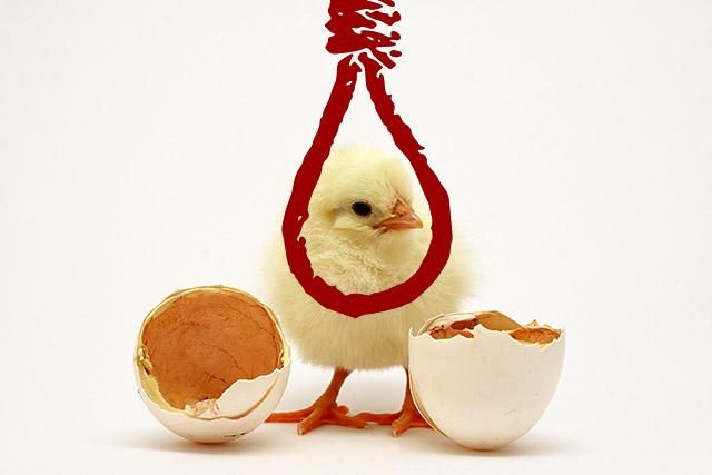 採卵鶏の悲惨さ
